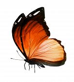 Orange Butterfly On White Background