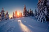Majestic winter landscape glowing by sunlight in the morning. Dramatic wintry scene. Carpathian, Ukraine, Europe. Beauty world. Happy New Year!
