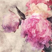 art grunge floral warm sepia vintage watercolor background with white, tea and pink roses and peonies