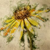 art grunge floral vintage watercolor background with yellow asters toned retro sepia filter effect