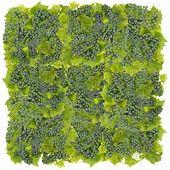 Green  Grapes Big Square