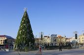 Preparation Of The Christmas Fir-tree