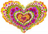Isolated Floral Lheart Mandala