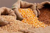 Organik Food:  Buckwheat, Corn And Flax In Jute Sack