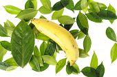 Tropical Ripe Banana On Green Leaf