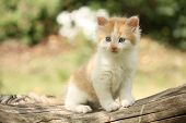 Happy White Red Kitten Resting On The Stump