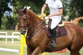stock photo of girth  - Brown horse portrait during competition in summer