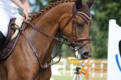 foto of girth  - Brown horse portrait during competition in summer - JPG