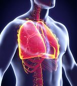 stock photo of respiratory disease  - Human Respiratory System Illustration  - JPG