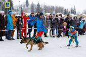 Skijoring In Russia. Volga Quest Sled Dog Race 2015