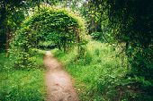 foto of garden eden  - Walkway Lane Path With Green Trees And Bushes In Garden - JPG