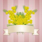 stock photo of mimosa  - illustration of Women - JPG