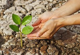 stock photo of water shortage  - hands giving water to a tree growing on dried and cracked ground  - JPG