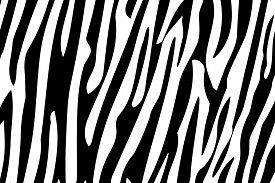 picture of jungle animal  - Zebra Stripes Seamless Pattern - JPG