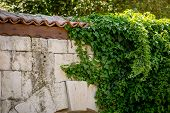 stock photo of ivy  - Ivy leaves on old stone wall with red tiled roof - JPG
