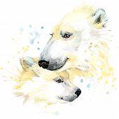 stock photo of bear  - polar bear T - JPG