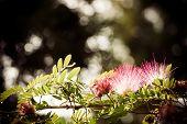 picture of tamarind  - Tamarind flower background blurred - JPG