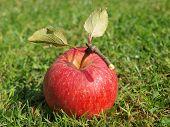 stock photo of bohemia  - view autumn fruits southern Bohemia Czech Republic  - JPG