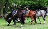 image of saddle-horse  - three horses with saddles Germany Husum - JPG