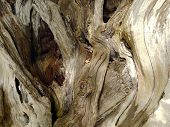 stock photo of driftwood  - Close up old driftwood in day time - JPG