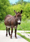 pic of wild donkey  - Beautiful portrait of a donkey photographed close up - JPG