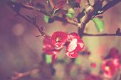 pic of early spring  - Red Blooming flower by creek in early spring  - JPG