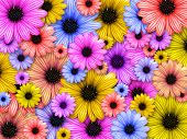 Background Made From Coloured Flowers