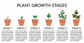 Plant Growth Stages Infographics. Line Art Icons. Planting Instruction Template. Linear Style Illust poster