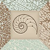 Nautilus Shell Background.