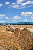 picture of suny  - photo of harvest time taken on beautiful suny day - JPG
