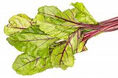 Beet Greens Flatlay Isolated On White Background Top View Fresh Green Leaves poster