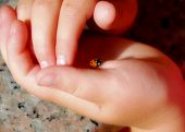 Ladybug In My Hands