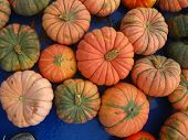 picture of tarp  - some mini pumpkins in different colors on a blue tarp - JPG