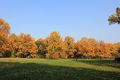 Field Tree,autumn