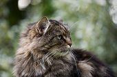 A male cat