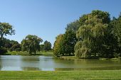 picture of weeping willow tree  - Landscaped lawn and weeping willow tree in corporate park - JPG