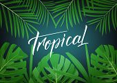 Tropical. Modern Design Layout With Lettering And Tropic Jungle Leaves. Summer Tropical Exotic Backg poster