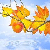 Frutos rojos en otoño.