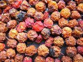 Berries Of Ashberry