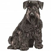 Vector Black Miniature Schnauzer Dog Sitting