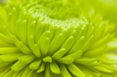 Macro Flower Petals
