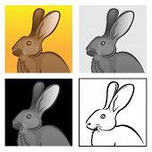 Kaninchen-Kopf, 4 Variation-Abbildungen