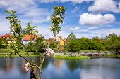 Blooming apple tree with town park and Rothenburg pond at background, Dinkelsbuhl Old Town, Central  poster
