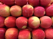 Close Up On Cripps Large Pink Apples,  A Particularly Attractive Variety Of A Medium To Large Size.  poster