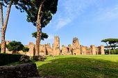 Picturesque View Of Terme Di Caracalla In Rome. Umbrella Pines In Vast Near Ruin poster