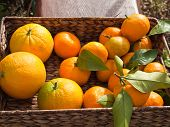 Mandarins in box outdoor