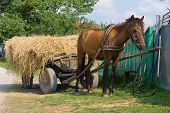 Horse With A Cart Loaded Hay