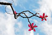 Pink Flowers on a Blue Sky