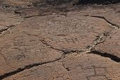 Petroglyph Carvings on Big Island Hawaii