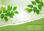 picture of ripped  - Nature background with green spring leaves and ripped paper - JPG
